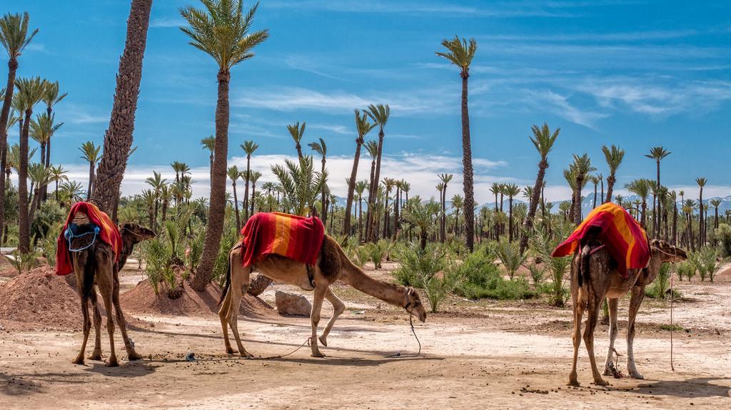 marrakech palms