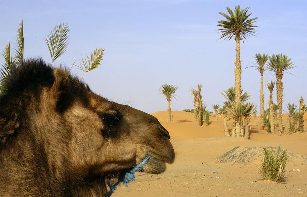 morocco nomad excursion