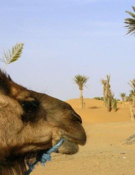 3 days from Fez to Marrakech via Merzouga Desert Sahara Trip